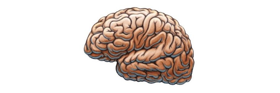 Three Common Models of the Brain to Help You Develop Better User Experiences
