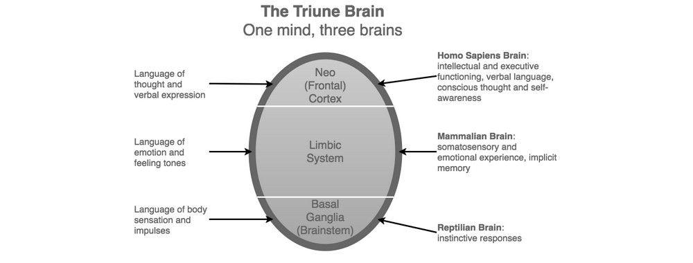 "The Concept of the ""Triune Brain"""