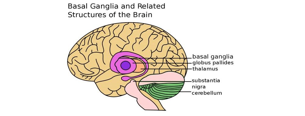 Our Three Brains - The Reptilian Brain